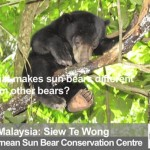 Saving the World's Smallest Bear, Behind the Schemes Episode 2