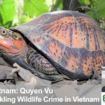 Tackling Wildlife Crime in Vietnam (c) Behind the Schemes, Episode 4