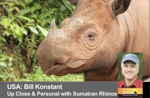 Up Close and Personal with Sumatran Rhinos