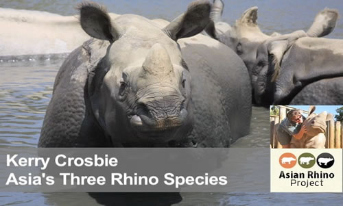 Asia's Three Rhino Species