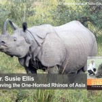 Saving the One-Horned Rhinos of Asia