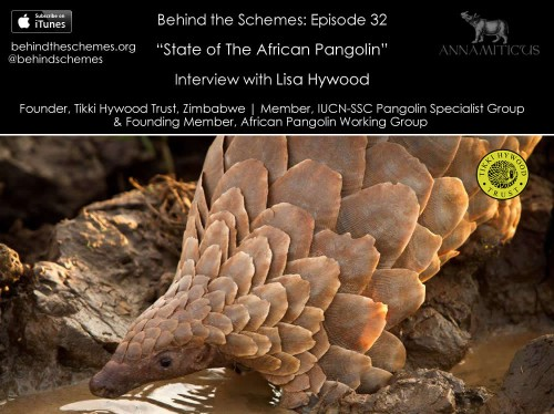 In Episode 32, we're talking about the state of the African pangolin.